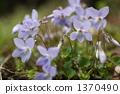 Flower of tachibubikusu 1370490