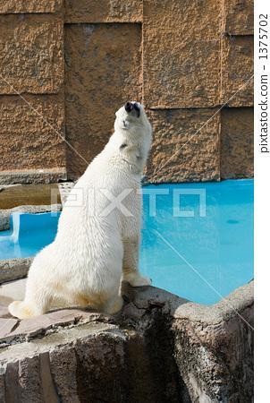 북극곰 1375702