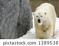 Polar bear of snowy day 1389538