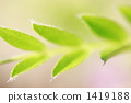 식물, 잎, 이파리 1419188