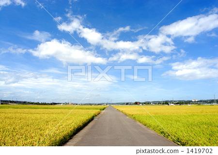 在稻田的路 1419702