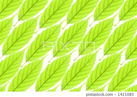 绿叶背景 1421083