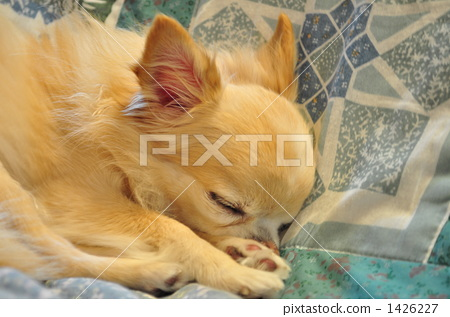 sleep, sleeping, dog 1426227
