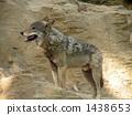 หมาป่า 1438653