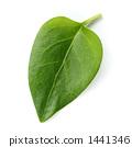 한 장의 나뭇잎 1441346