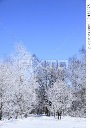 무빙가 닿은 나무 1454273