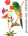 鳳頭鸚鵡 鸚鵡 長尾鸚鵡 1458414
