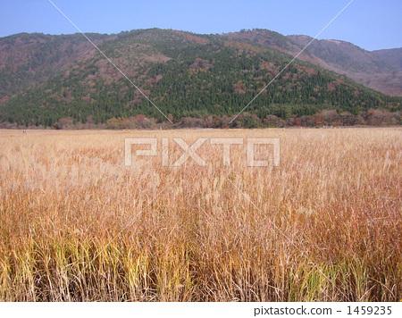 Kokurugahara plateau in autumn 1459235