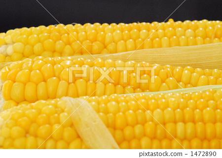 剛剛煮完 玉米 玉蜀黍 1472890
