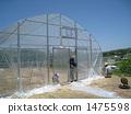 greenhouse 1475598
