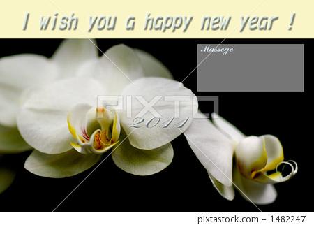 Phalaenopsis orchid 1482247