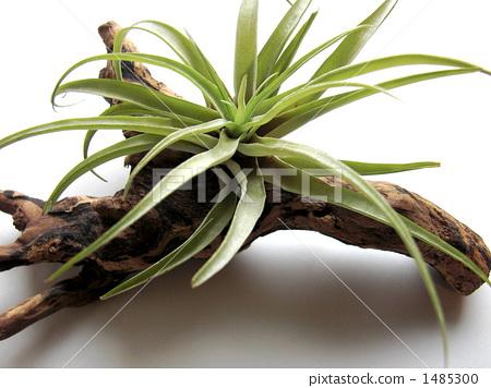 health, robust, epiphyte 1485300