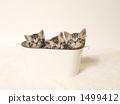 在碗蓋子的三隻小貓 1499412