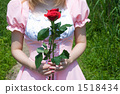 Made with roses 1518434
