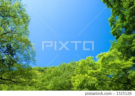 신록의 숲과 푸른 하늘 1525126