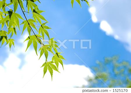枫叶和天空 1525170