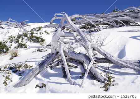 Intertwining white wood 1525705
