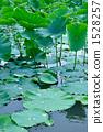 수생 식물 1528257