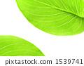 녹색 잎 배경 1539741