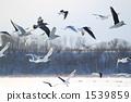bird, birds, fowls 1539859
