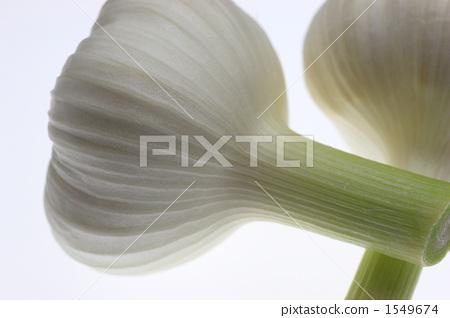 Garlic 1549674