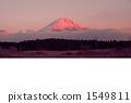 紅富士 1549811