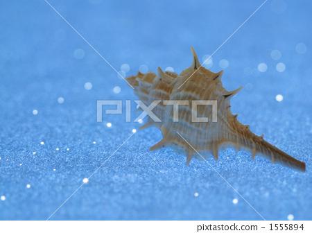 Seashell image 1555894