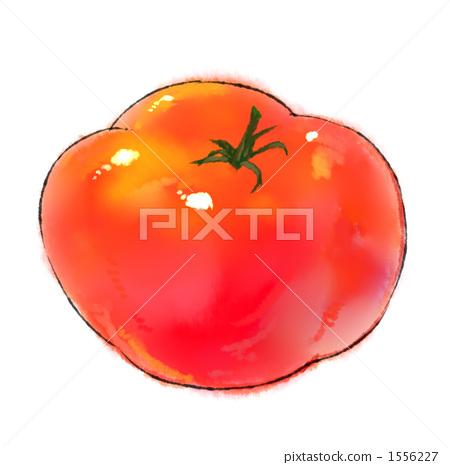 Tomato 1556227