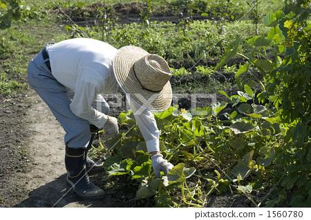 인물, 사람, 농업 1560780
