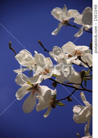 주먹의 꽃 1561049