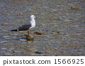 water, surface, gull 1566925