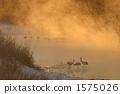 Awakening in winter 1575026