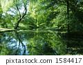 แหล่งน้ำ,สระน้ำ,ผิวน้ำ 1584417