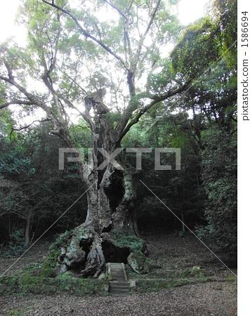 다케오의 녹나무 1586694