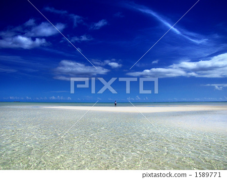 The ocean standing on the sandy beach with its face at low tide 1589771