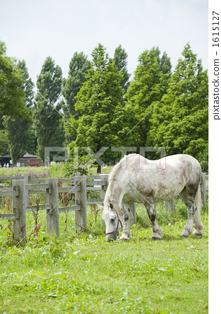 Ranch horse 1615127