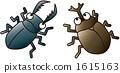 害蟲和甲蟲 1615163