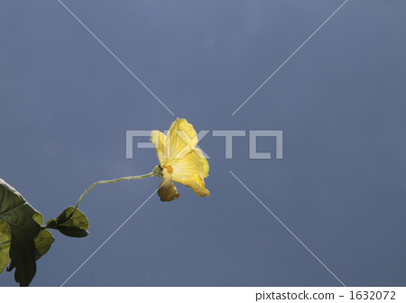 Bitter flowers 1632072