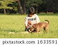 작은, 강아지, 개 1633591