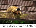 松鼠猴 树 树木 1647826