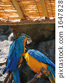 鹦鹉 黄色 蓝色 1647828