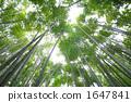 竹丛 透过树叶的阳光 报国寺 1647841