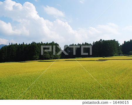 Rural scenery spreading in golden color 1649015