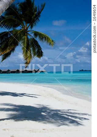 coconut palm, maldives, indian ocean 1649654