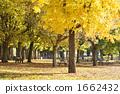 สวนสาธารณะที่มีใบเหลือง 1662432