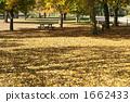 สวนสาธารณะที่มีใบเหลือง 1662433