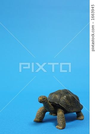 turtle 1663945