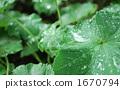 雨的葉子 1670794
