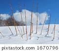 凝視從雪的死的分支 1670796
