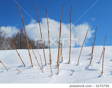 凝视从雪的死的分支 1670796